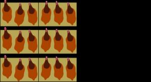Kooi eieren