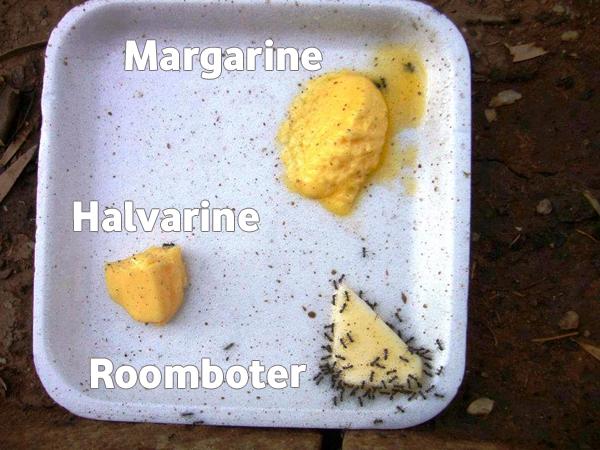 Transvetten in margarine veroorzaken kanker