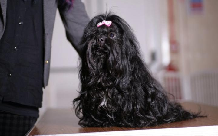 Hond van Carol Blackburn-Harvey overleden na inenting van Nobivac L4 vaccin